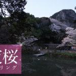 福岡から行く夜桜ツーリング(御船山楽園)