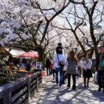 福岡から行くお花見ツーリング(うきは・秋月)