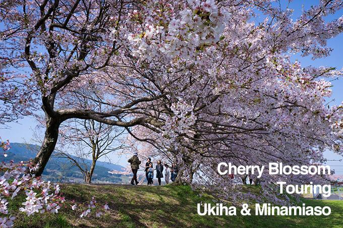 【うきは】流川の桜並木と南阿蘇の観音桜ツーリング【南阿蘇】