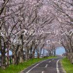 【佐賀】桜トンネルツーリング(徐福サイクルロード)【諸富】